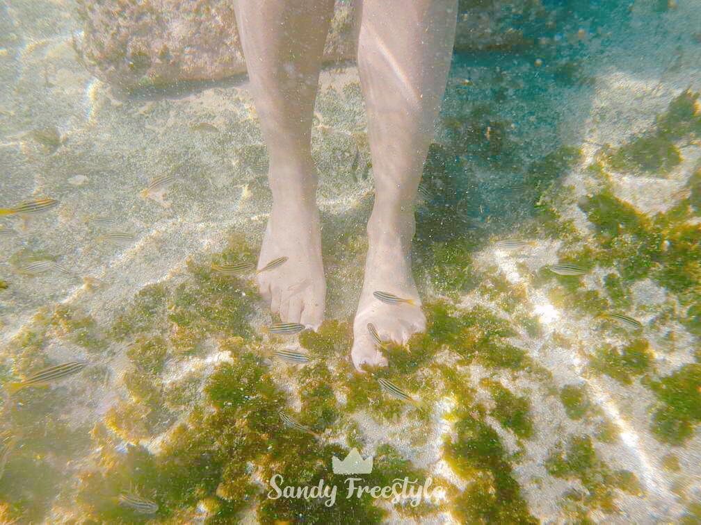 เที่ยวทะเลซิดนีย์ Sydney Beach Sandy Freestyle